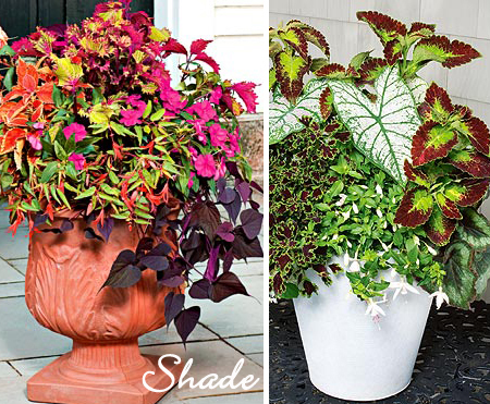 Potted Plants for Shade
