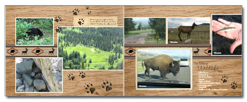 Montana Photo Album – Wildlife Spread