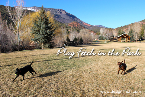 Celebrate Earth Day: Play Fetch in the Park