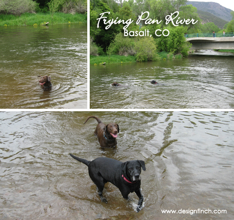 Swimming in the Frying Pan River – Basalt, CO