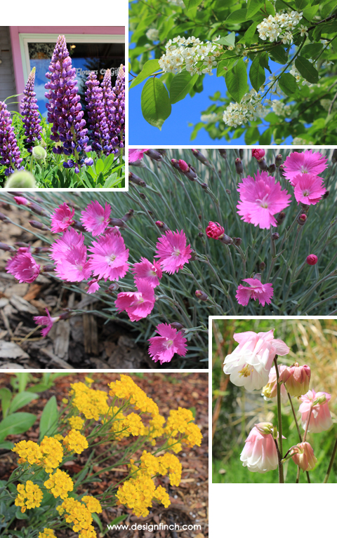 May Flowers – Basalt, CO